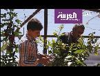 شاهد كرفان يتحول إلى بستان بأيادي السوريين في مخيم الزعتري