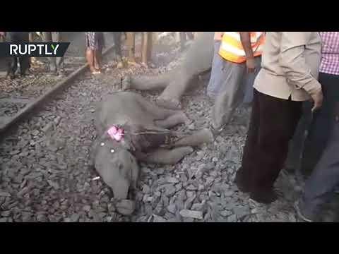 شاهد قطار يقضي على 4 فيلة في حادث مأساوي في الهند