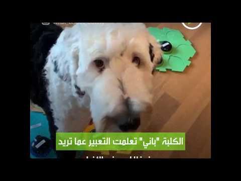 شاهد كلب يعبر عن رغبته بلغة بشرية