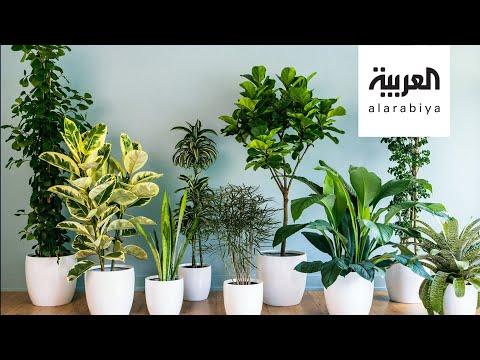 النباتات المتدلية وطرق العناية بها مع مهندسة زراعية