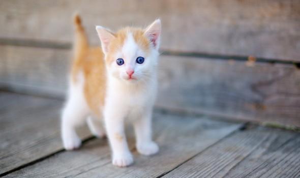 العرب اليوم - تفسير و دلالات رؤية القطة في المنام للمتزوجة