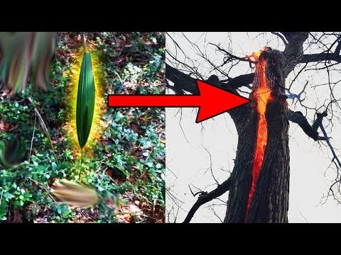 أكثر 10 أكتشافات غامضة و مرعبة في الغابات