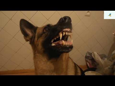 كلب يتحكم في حالته المزاجية