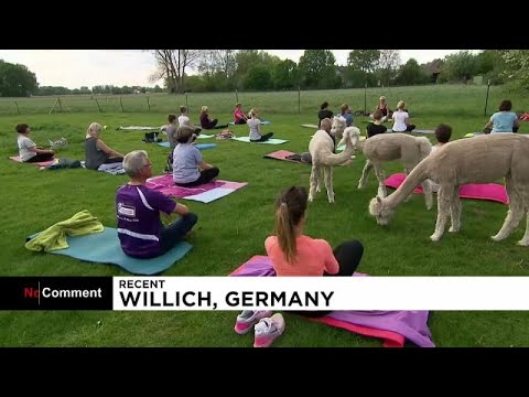 شاهد أجواء ساحرة لممارسة اليوغا في الحياة البرية في ألمانيا