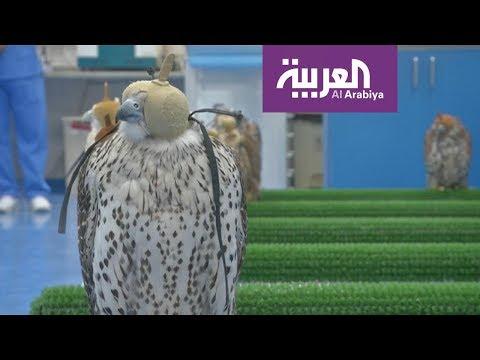 شاهد افتتاح أكبر مستشفى لعلاج الصقور في أبوظبي