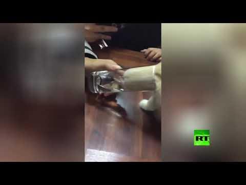 شاهد قطة تغوص في كأس الماء لشدة عطشها