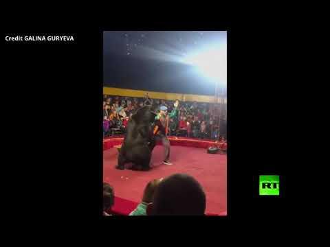 شاهد دب يهاجم مدربه أثناء عرض للأطفال في سيرك روسي