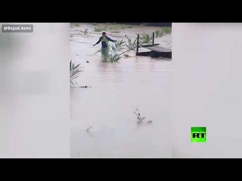 شاهد شاب ينقذ كلبًا من الغرق في فيضانات ماليزيا