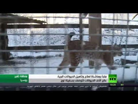 شاهد ملجأ الحيوانات النادرة في روسيا بمثابة سفينة نوح