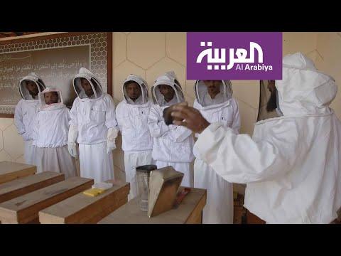 شاهد مشاهد من مبادرة أرامكو لإنتاج العسل بالسعودية