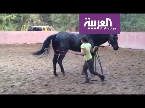 شاهد دانة القصيبي سعودية تروض الخيول بحب وشغف