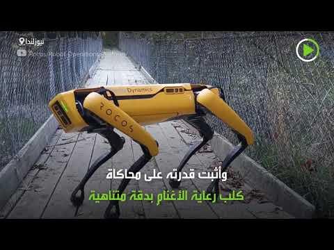 شاهد روبوت راعي غنم طورته بوسطن ديناميكس
