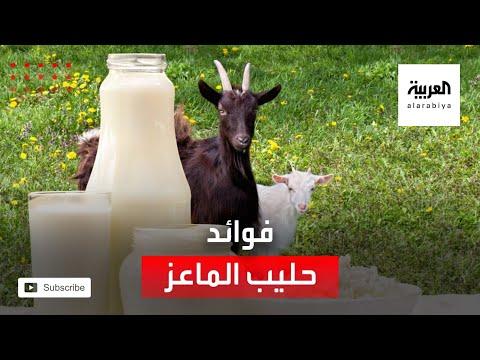 شاهد تعرّف على على فوائد وأسرار حليب الماعز
