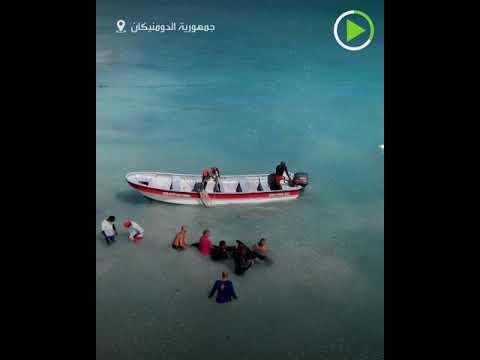 شاهدالشعاب المرجانية تحاصر أحد الحيتان