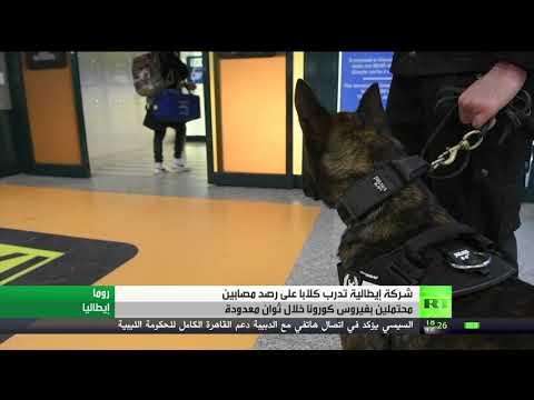 شاهد إيطاليا تدرب كلابها على رصد المصابين بكورونا